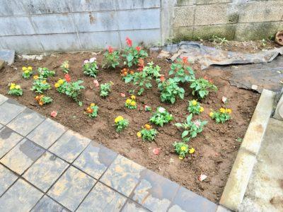 広い庭で家庭菜園をしていく予定です。